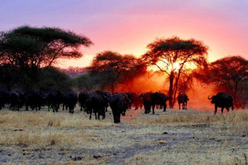 Lennud Tansaania
